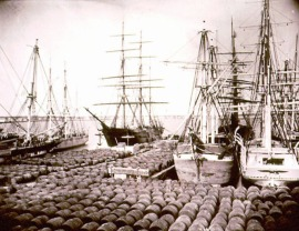 Whaling ships and oil casks, New Bedford MA, 1870