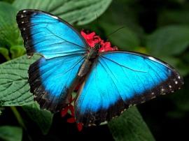 butterfly_08_m