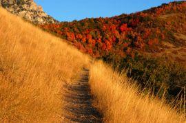 mountain_trail